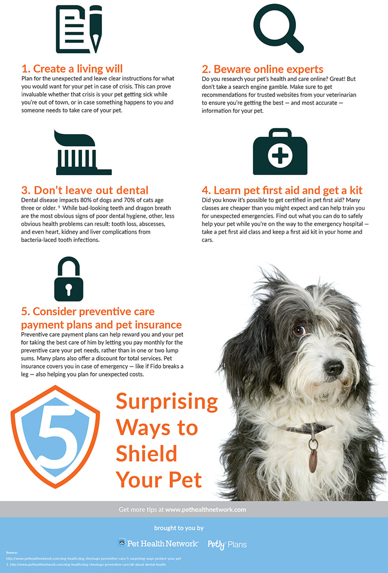 Surprising Ways to Shield Your Pet