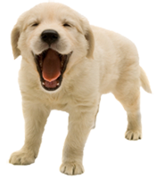Pet Dental Care